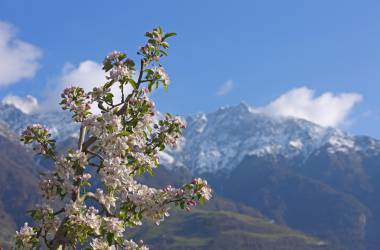 Backdrop for your vacation in south Tyrol